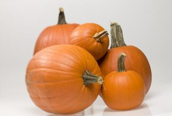Intact stems help prevent pumpkins from rot.