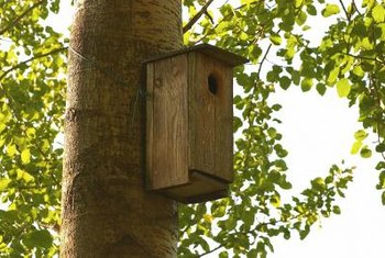 A birdhouse won't get higher off the ground as a tree grows.