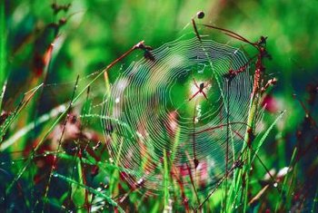 Spiders often rely on vibrations to detect prey, rather than their poor eyesight.