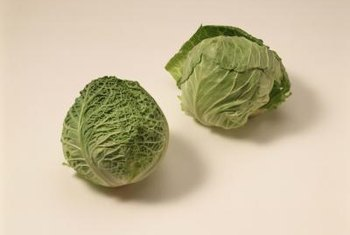 Cabbage sprouts look like miniature heads of cabbage.
