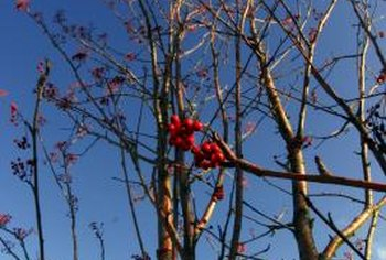 Warm spring weather triggers the opening of dormant winter fruit buds.