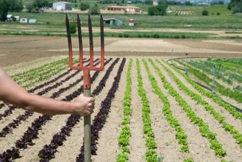 Straight Garden Rows Look Good And Are Easier To Maintain.