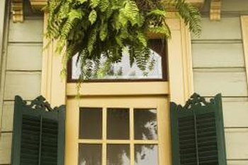 Ferns are classic hanging plants for areas in the shade.