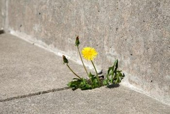 Weeds and grass can invade cracks in pavement.
