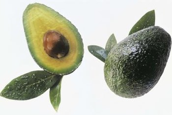 """Hass"" avocados have a dark purple to almost black pebbly skin with excellent flavored fruit."