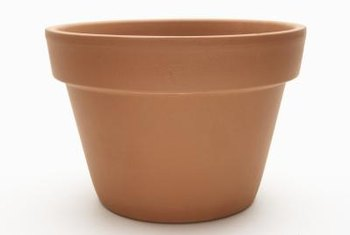 To prevent terra-cotta pots from cracking in winter, cover them with plastic.