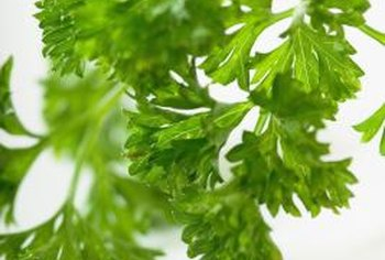 Parsley is a highly concentrated source of potassium.