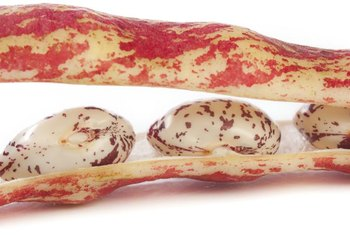 Borlotti beans are an Italian variety of fall-harvested beans.