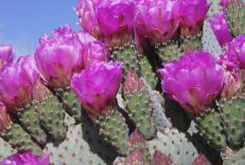 When treating a cactus for fungus, test a small area first to avoid damaging the plant.