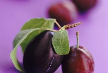 Damson plums are dark in color when ripe and ovoid in shape.