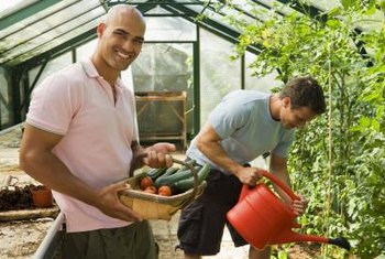 Keep vegetables warm and cozy through the winter in a greenhouse.