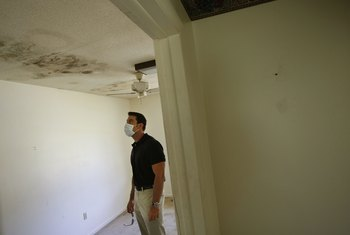 Mold inside your apartment could lead to serious health problems.