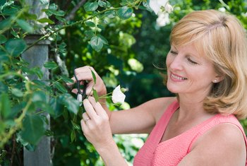 Use flowering vines to quickly cover support structures.