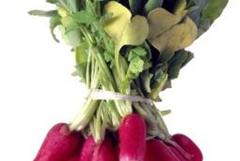 Tapered radish varieties have deeper roots than round types.
