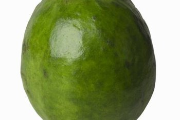 Ripe guava fruit are soft to the touch and emit a sweet, musky aroma.