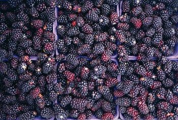 Blackberries are slightly darker and have smaller seeds than dewberries.