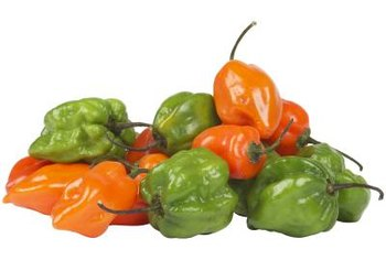 Healthy habanero peppers need moist soil.