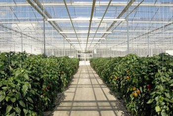 Even-span greenhouses are just one option when creating a greenhouse space.