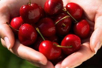 Dwarf cherry trees produce the same size fruits as standard varieties.