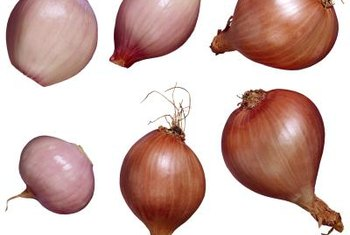 Shallots feature green leaves that grow from clusters of edible bulbs.