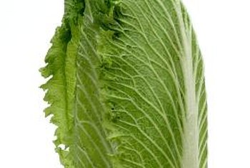 Eat bok choy cooked or use it raw as you would romaine lettuce.