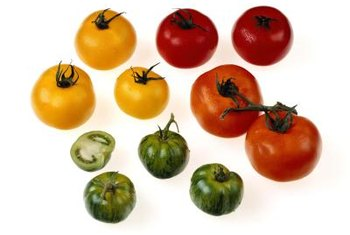 Tomato plants produce fruit in a wide range of sizes and colors.