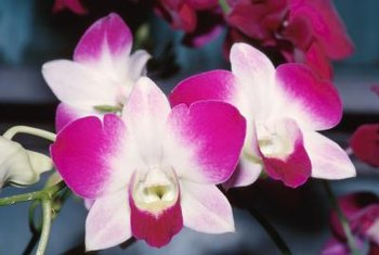 Brown Sticky Spots on an Orchid | Home Guides | SF Gate