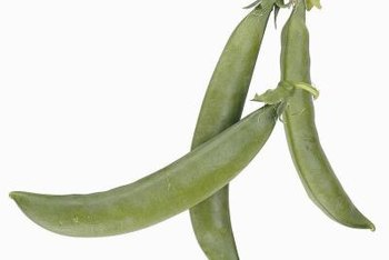 Sugar snap peas feature tender, bright green pods.