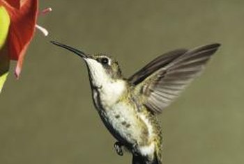 Flowers that attract hummingbirds tend to be less attractive to bees.