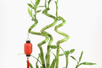 Minerals in tap water, such as fluoride, can cause leaf yellowing on lucky bamboo.