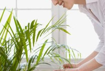 Ensure plants are not water-stressed before applying soap spray.