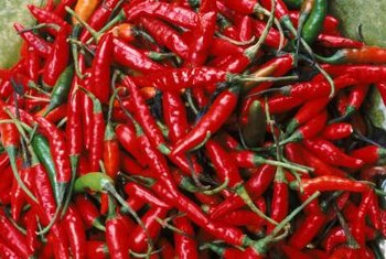 Chi-Chien peppers are fiery hot at 70,000 Scoville units.