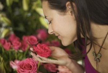 Healthy roses produce pleasant aromas.
