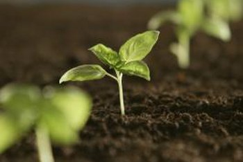 Sterile soil benefits seeds and plants.