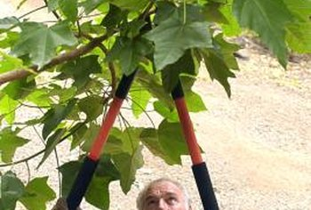 Pruning shears are easy to use to prune smaller branches.