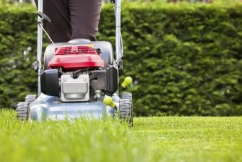 Mowing grass regularly helps mask deep-green dog spots.