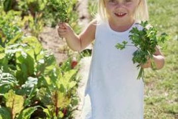 A children's garden contains plants safe for children to touch and taste.