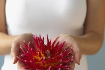 Dahlias come in a wide array of flower forms and colors.