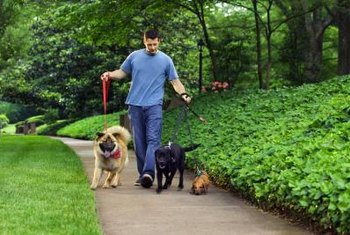 Daily walks help dogs expend energy and provide socialization.