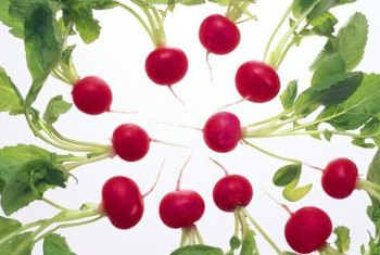 Juiced radishes preserve the nutrients and spicy taste of the whole, raw vegetable.