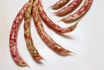 The yellowish pods of borlotti beans are speckled cranberry red.