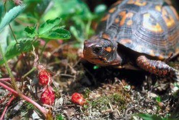Wild strawberries provide food for wildlife as well as humans.