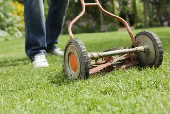 Proper lawn care prevents fungal diseases.