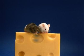Mice produce 6 to 10 litters per year, according to the UKAG.