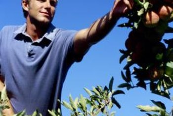 Pick fruit when ripe to discourage pests from attacking the tree.