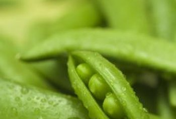Fresh green peas are quickly and easily hulled and cooked for dinner.