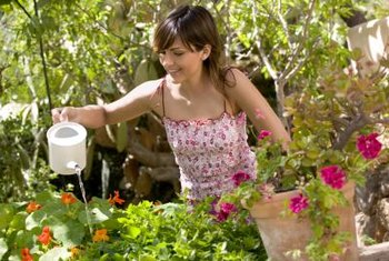 Moisten the entire surface of the soil when watering potted plants.