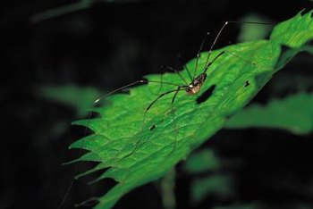 Often, spiders are an important part of a healthy garden.