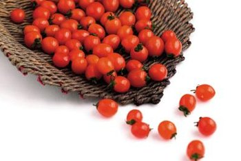 Growing in clusters, Sweet 100 cherry tomatoes will produce fruit until the first frost.