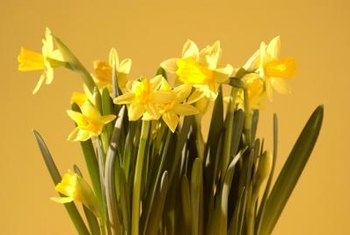 Golden daffodils provide a splash of color.